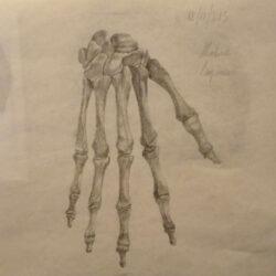 anatomy-hand